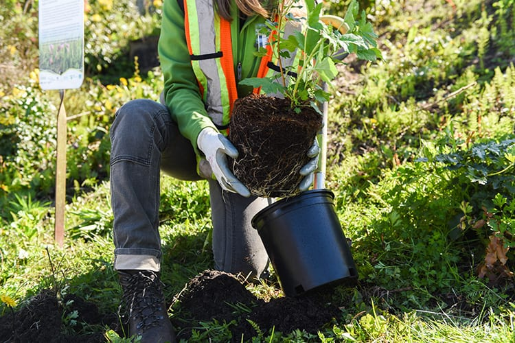 A person planting trees